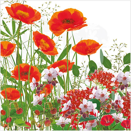 For The Love Of Poppies! Poppy Greeting Cards And Stationery