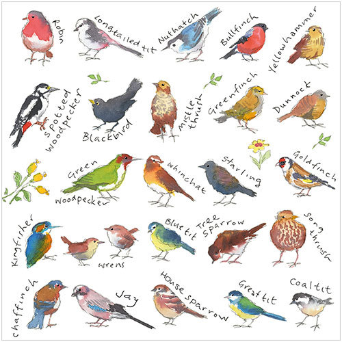 ws485 popular birds greeting card