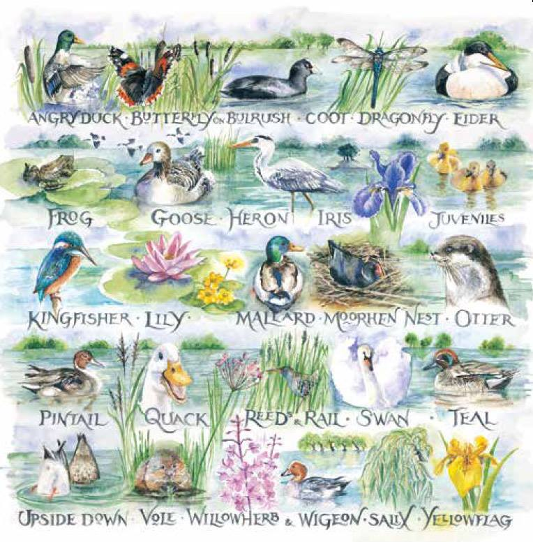 Waterside Alphabet new greeting card designs by Val Goldfinch